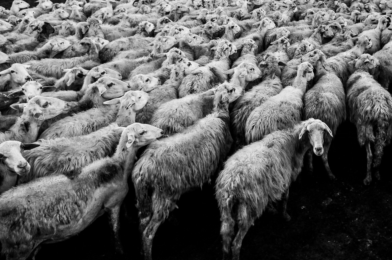 Follow the herd or pursue your passion